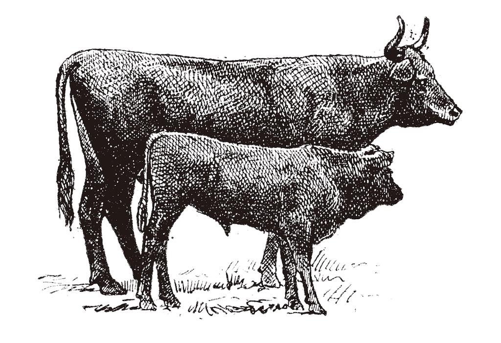 黒毛和牛の歴史