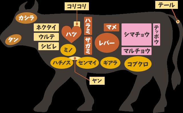 牛ホルモン部位一覧